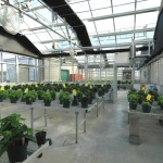 greenhouse2 ppt.jpg